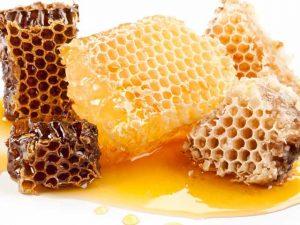 honey-bee-photo