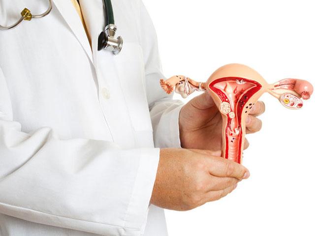 Organs-in-the-female
