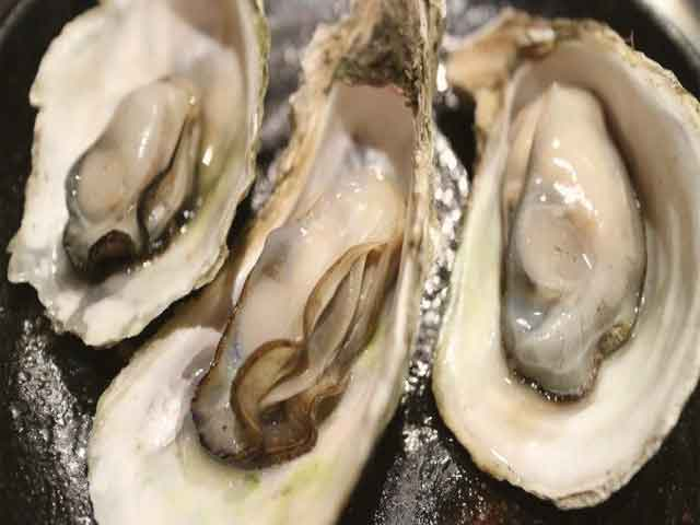 news-Oyster-site