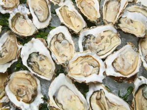 Oyster-news-site